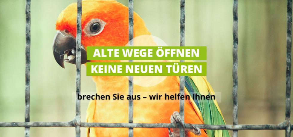 Bild von einem Vogel im Vogelkäfig