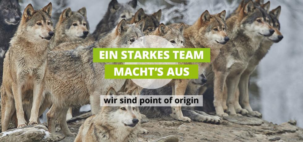 Bild von Wolfsrudel